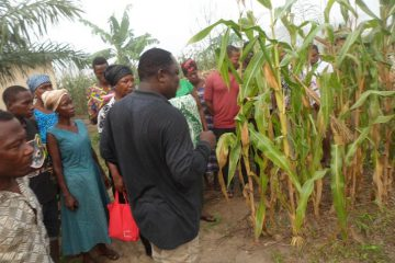 Creating value for small-scale farmers