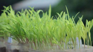 M&B New Hybrid Seeds